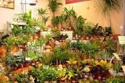 причудливые сны, знаки снов,сновидения,